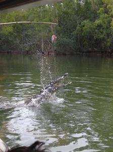 croc in lagoon