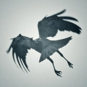RaveninFlight.jpg