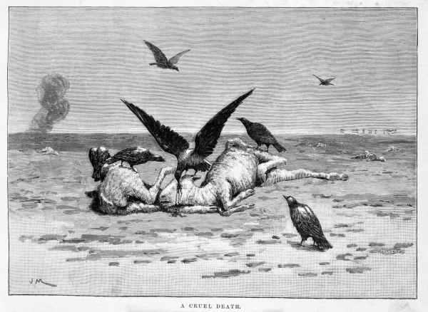 'A cruel death'. Wood engraving by J. Macfarlane. 'A Cruel Death. Recent Drought in New South Wales'. Published in The Illustrated Australian News (January 12, 1889).