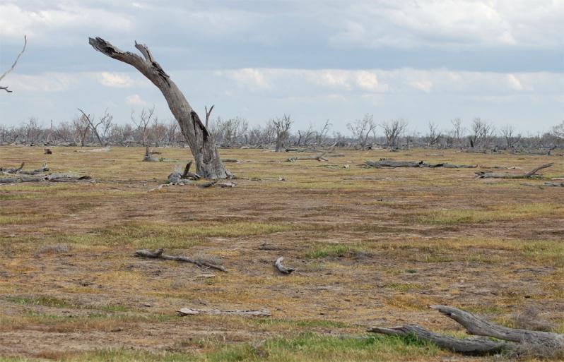 Saltbush plains became this. Grasses became extinct. Photo credit: Cameron Muir