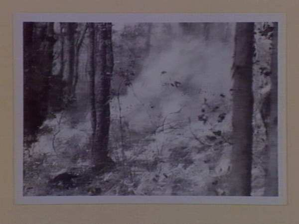 Image: 'Bushfire burning through undergrowth'. n.d. Courtesy of the State Library of Victoria.