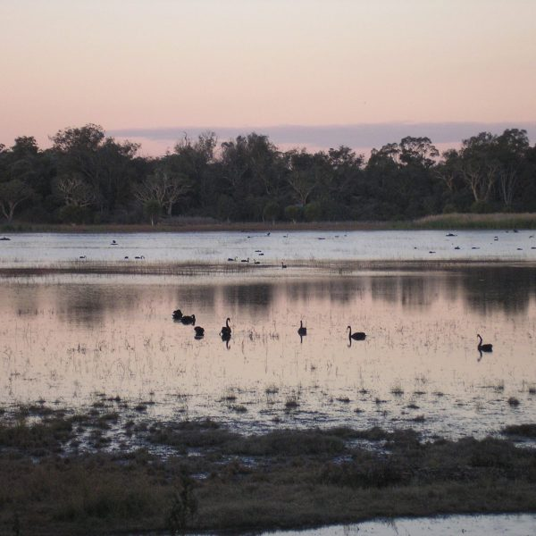 Image: Coolbellup/North Lake, Save Beeliar Wetlands Facebook page, December 2014.